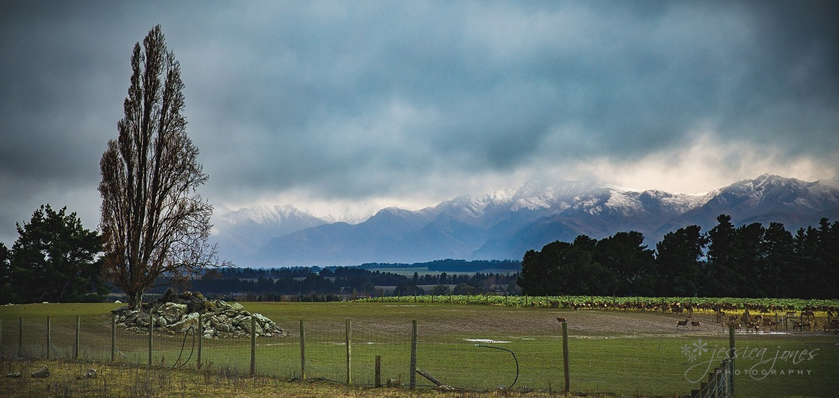 wanaka_wedding-047